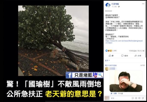 「國瑜樹」風雨吹襲倒地 林園區公所急扶正!