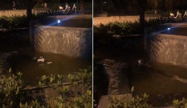 來公園散步哈士奇跳池塘! 夜游好開心:我是一條美人魚❤