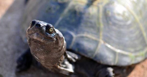 26歲妹開趴後腹痛 就醫後竟從「私密處」抓出「18公分烏龜」!