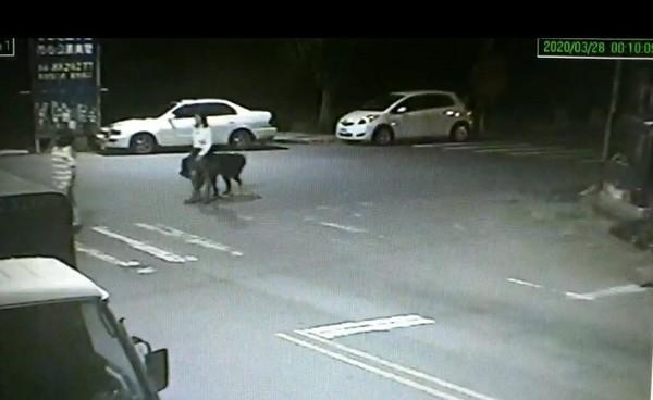 婦公園遛獒犬…他出口「要強x你」 街友被逼下跪還遭鐵棍痛毆亡