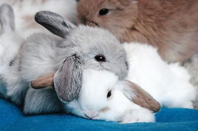 看到可愛動物擠一起睡覺,心都融化了