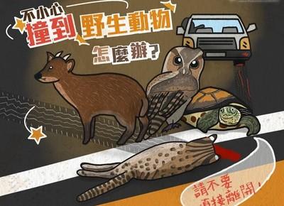 撞到野生動物怎麼辦? 救命5步驟「每個生命都珍貴」