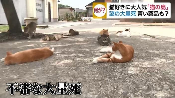 大檸檬用圖(圖/翻攝自日本電視台TBS節目「あさチャン」)