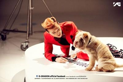 八字好到讓人忌妒的韓流明星愛犬