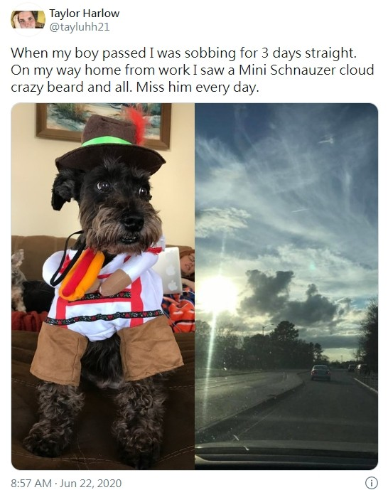 ▲▼網友家中的愛犬過世後,空中出現「狗狗形狀」雲朵。(圖/翻攝自Twitter/tayluhh21)