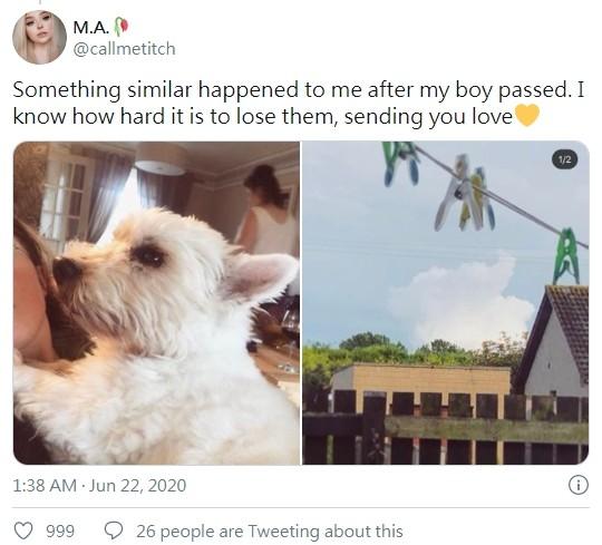 ▲▼網友家中的愛犬過世後,空中出現「狗狗形狀」雲朵。(圖/翻攝自Twitter/callmetitch)
