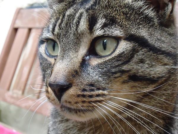 憨貓吃完藥還緊盯別人膠囊!伸左掌探頭張小嘴 萌樣吃苦當吃補