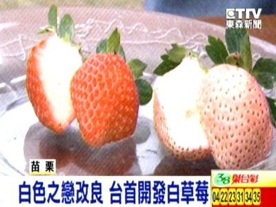 粉紅果皮口感如蜜桃 日超夯白草莓台果農成功研發