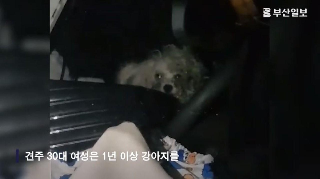 大檸檬用圖(圖/翻攝自YOUTUBE@부산일보)