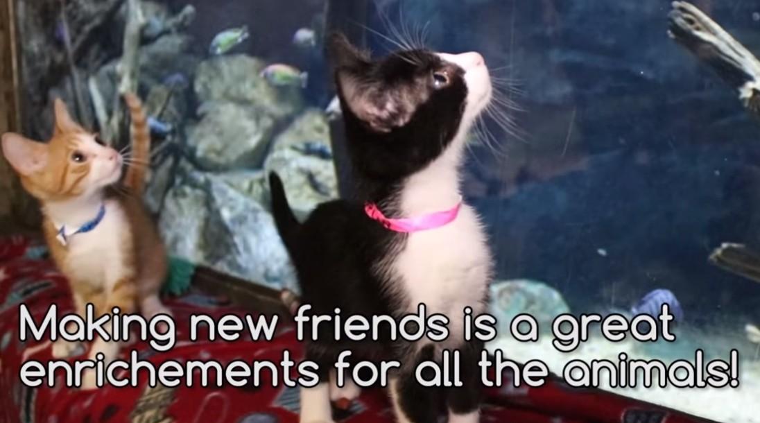 ▲▼美國動物收容所與動物園合作,帶著毛小孩與園內動物互動。(圖/翻攝自Facebook/Animal Defense League of Texas)