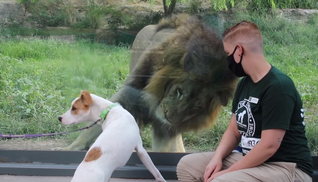 ▲美國動物收容所與動物園合作,帶著毛小孩與園內動物互動。(圖/翻攝自Facebook/Animal Defense League of Texas,下同)