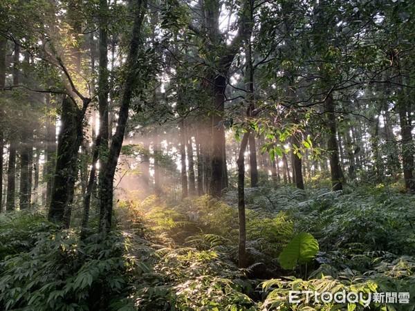 森林系仙境換氧去!全台4處「忘憂步道」其中3處能沿鐵軌走