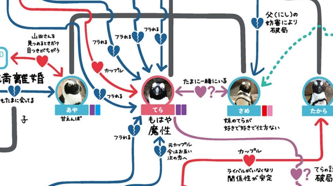 ▲▼日本水族館統整出「企鵝間的關係圖」,細看發現精采程度堪稱八點檔。(圖/翻攝自Kyoto Aquarium官網 )