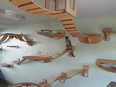 在家也有戶外感,貓奴巧手造空中貓城