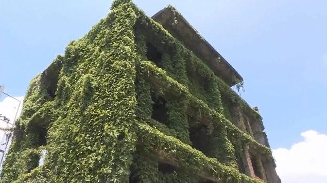 網美瘋拍台南「綠巨人浩克的家」!當地人:那棟是鬼屋 真相曝光。(圖/東森新聞)