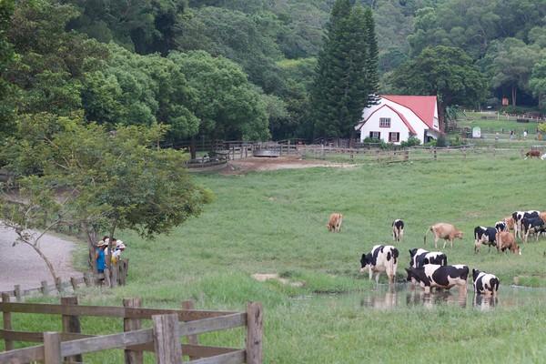 ▲▼飛牛牧場。(圖/台灣休閒農業協會提提供)
