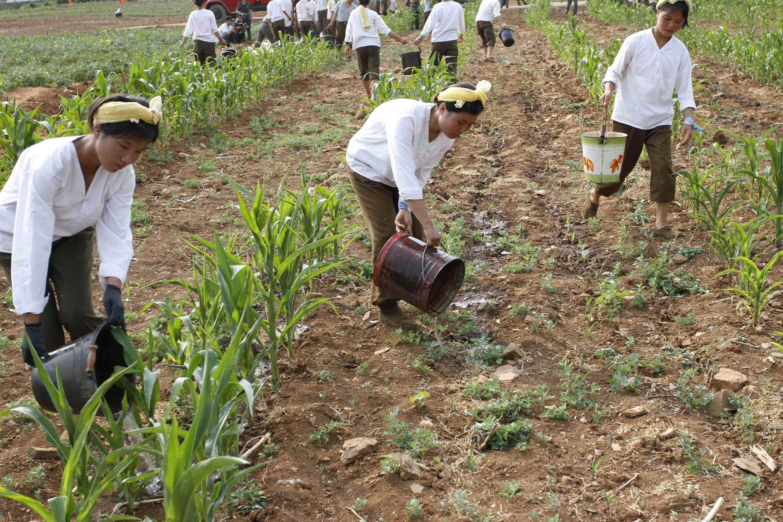 ▲▼北韓經歷嚴重的饑荒與乾旱,黃州郡女兵正為玉米田澆水。(圖/達志影像/美聯社)