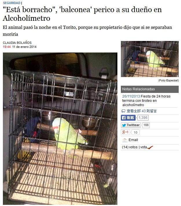 「他喝醉了!」鸚鵡向交警爆料主人酒駕