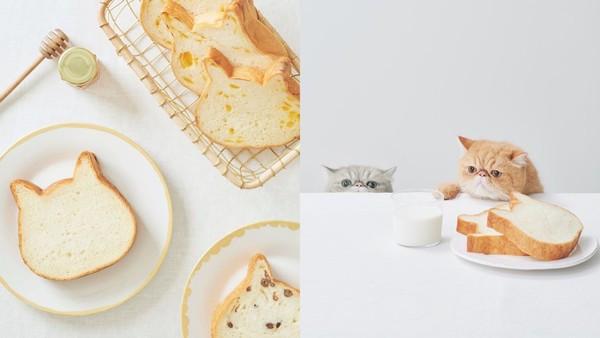 必朝聖!日本IG狂洗版「療癒貓咪生吐司」來台了 快閃時間、地點先看
