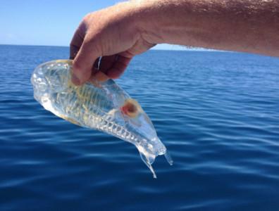 海邊捕獲奇生物…鄉民:阿不就飛機杯