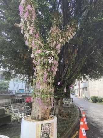 桃園成立「石斛蘭園丁班」 發展特色社區成「打卡新景點」 | ETtoda
