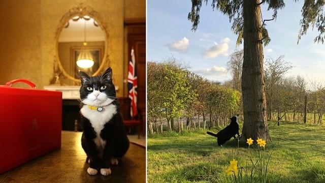 ▲▼英國外交「最萌補鼠大臣」默斯頓宣布退休。(圖/翻攝自Twitter/Palmerston)