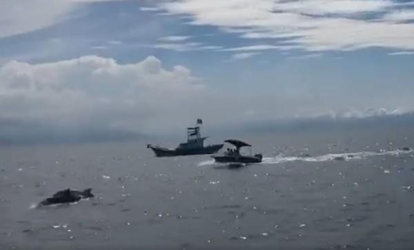 更新/龜山島牛奶海衝撞鯨豚...2私人遊艇船主到案!辯好奇就近觀看
