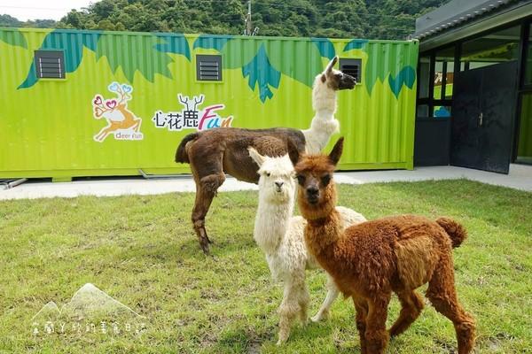 宜蘭梅花湖畔新景點!1000坪互動農場「「心花鹿Fun」有超療癒草泥馬