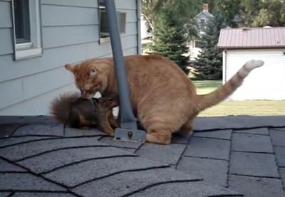 小松鼠回大自然後 仍回來找貓咪老友