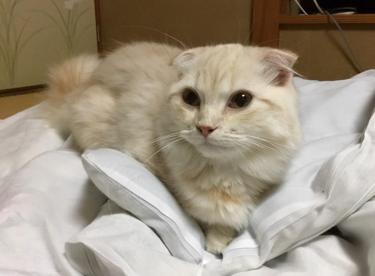 ▲▼日本貓咪陪睡旅館(圖/翻攝自mycat-yugawara.com)