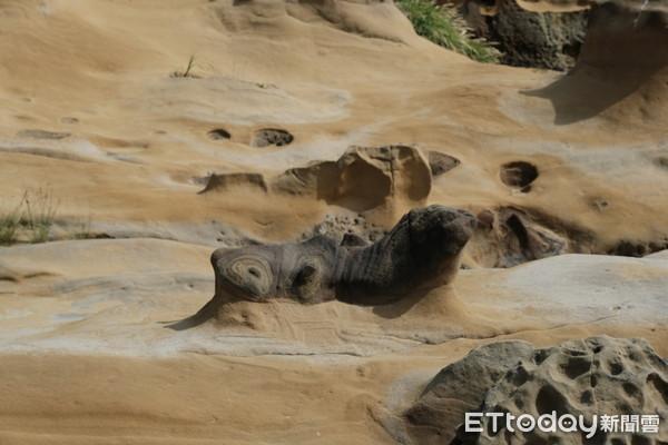 精選北部3處「動物奇岩」!小海豹岩隱身和平島、拉布拉多岩在金瓜石   E