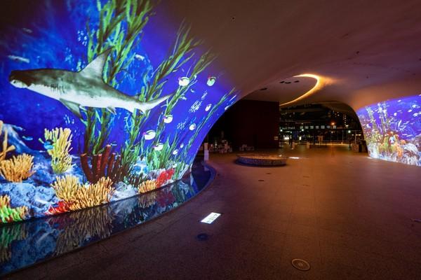 19米曲牆變「沈浸式叢林、大型水族箱」!台中歌劇院「光之曲幕」打造全新打卡點