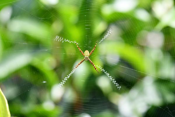 有機茶園蜘蛛類數量高!專家調查發現「6種台灣新紀錄種」   ETtoda