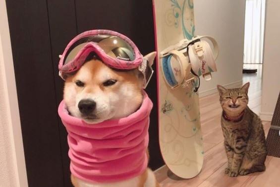 欠扁貓見室友穿「粉紅滑雪裝」偷笑 柴無奈:麥勾糗啊 | ETtoday寵