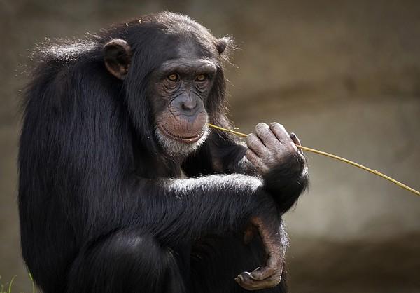 員工遭控佔領度假小屋 南非克魯格國家公園駁:被動物佔領! | ETtod