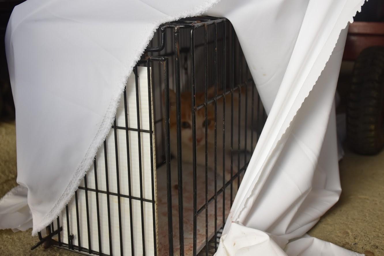 ▲▼獸鋏後重生,截肢貓展開幸福的第二貓生(圖/台灣之心提供,請勿隨意翻拍,以免侵權)