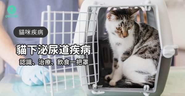 6症狀看貓下泌尿道疾病 認識、治療到飲食照護一把罩 | ETtoday寵