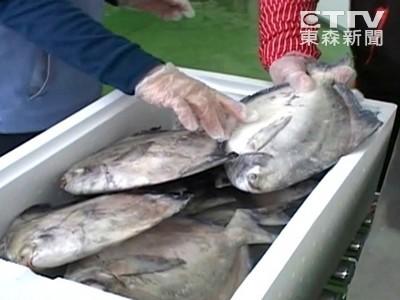 春節狂吃心血管疾病恐上身 消基會:多吃魚少吃肉