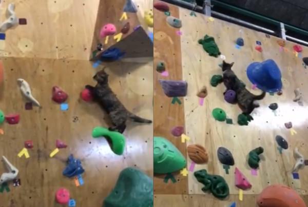 浪貓住進攀岩館「輕鬆登頂」 奴才:別把經理背回家! | ETtoday寵