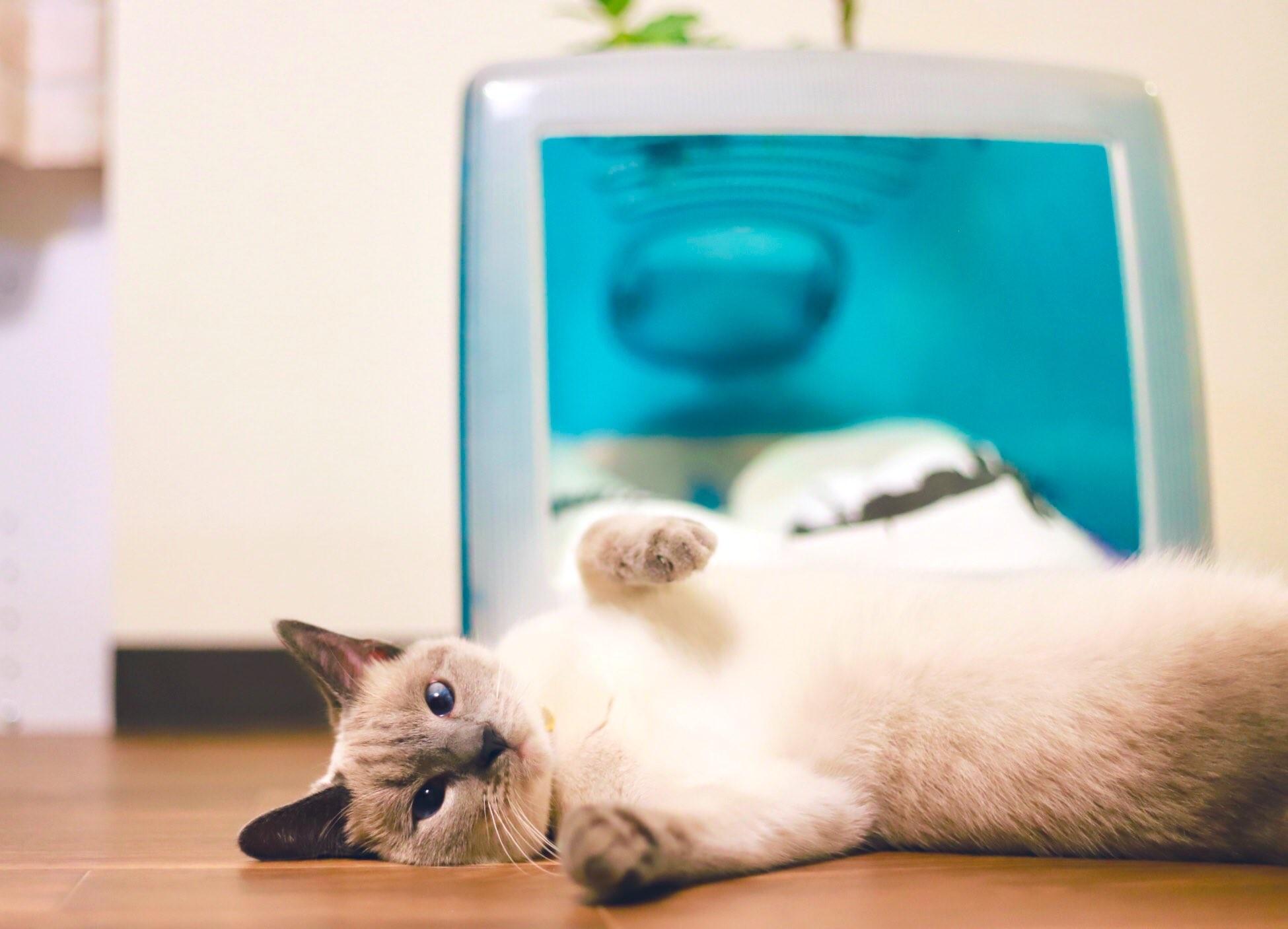 ▲▼日本網友將iMac G3掏空,打造成貓咪新臥室。(圖/翻攝自Twitter/Modest_Phouka)