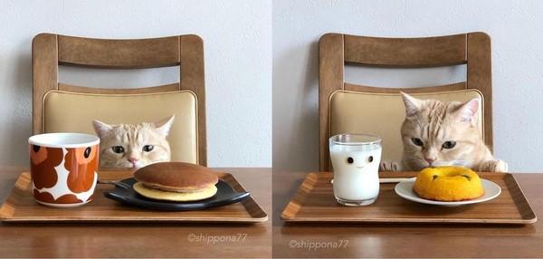 「J個可以吃嗎?」橘貓哀怨趴桌成另類美食網紅 吸10萬粉陪盯哨   ET