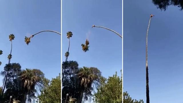 ▲▼美國修棕櫚樹工人為維生天空盪鞦韆,網友看了怵目驚心。(圖/翻攝自tWITTER/RexChapman)