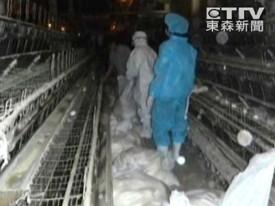 農委會證實 南部鵝鴨場爆H5N8、新型H5N2禽流感