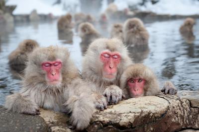 美忍者/入境要隨俗!日本泡湯時該注意的5種行為