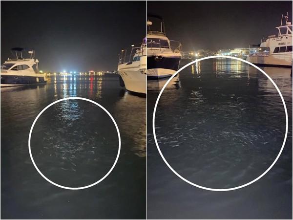 台南1天連4震!安平漁人碼頭「魚群狂跳」亂竄…當地人給解答
