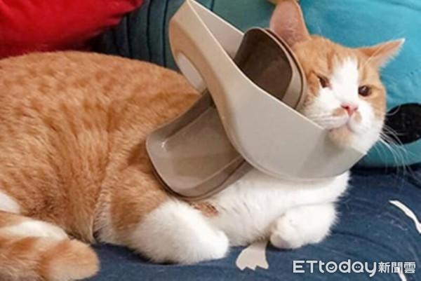 傻貓玩嗨頭卡垃圾桶! 蓋子賞一巴掌「擠出嘴邊肉」