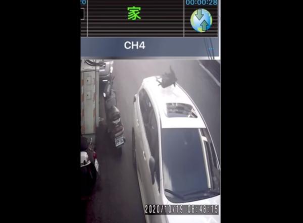 新竹小黑狗「從6樓丟下」車頂都被砸爛! 網氣炸:這是謀殺