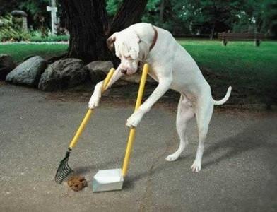 專家觀點:狗主人都有可能犯的5個錯