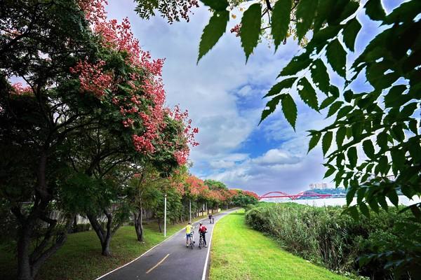 秋季限定粉紅美景!新北「5處四色樹打卡點」點綴河濱公園 | ETtoda