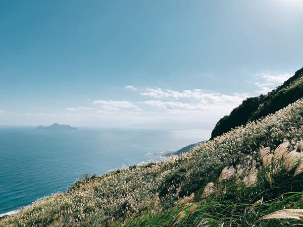 「草嶺古道芒花季」11/7登場!桃源谷、山中的拉布拉多、泡溫泉一日提案